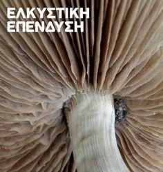 Σημαντικές προοπτικές συνεχίζει να εμφανίζει η καλλιέργεια μανιταριών προσφέροντας τη δυνατότητα για νέα πηγή εισοδήματος, εξαιτίας κυρίως του γεγονότος ότι η εγχώρια παραγωγή υπολείπεται της κατανάλωσης στην Ελλάδα. Παρά το γεγονός ότι οι κλιματολογικές συνθήκες ευνοούν την καλλιέργεια μανιταριών στην Ελλάδα, εισάγονται κάθε χρόνο χιλιάδες τόνοι μανιταριών, προκειμένου να καλυφθεί η εγχώρια ζήτηση. Έτσι, ενώ η κατανάλωση μανιταριών στην Ελλάδα κινείται κάθε χρόνο στα επίπεδα 11.000 τόνων,