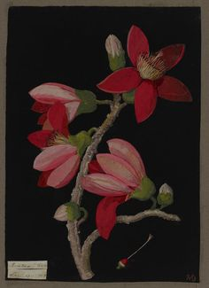 mary_delany_paper flower