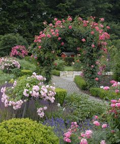 Cottage garden with Flower Carpet roses