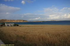 Champ de cereales au bord de la baie de Naoussa - Paros - Cyclades - Grece