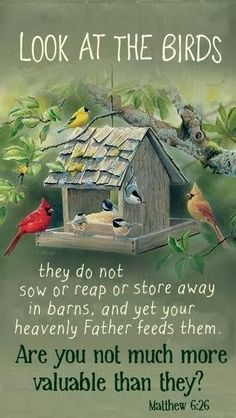 Matthew 6:26 (KJV) ~ Behold the fowls of the air: for they sow not, neither do they reap, nor gather into barns; yet your heavenly Father feedeth them. Are ye not much better than they?