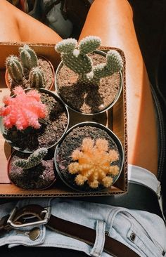 natur aesthetic Image uploaded by c l o u d y . Find images and videos about nature, aesthetic and girly on We Heart It - the app to get lost in what you love. Cactus Backgrounds, Plants Are Friends, Summer Aesthetic, Nature Aesthetic, Plant Aesthetic, Happy Vibes, Cactus Y Suculentas, Cacti And Succulents, Cactus Plants