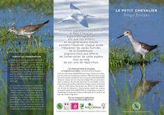 Festival International des OIseaux Migrateurs  #BirdDay