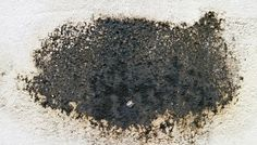#Mold grows outdoors and indoors. #Household #mold is the ones which grow inside our homes or dwelling places.