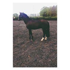 My beautiful pony, blazer.