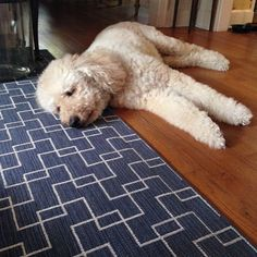 It looks like this cute and cuddly dog approves of our Castillo rug which is a navy geometric pattern and perfect for a living room. The feeling is mutual. Thanks to for posting this amazing photo. I Love Dogs, Cute Dogs, Puppy Pictures, Puppy Pics, Stanton Carpet, Cutest Dog Ever, Puppy Care, Cute Little Animals, Four Legged
