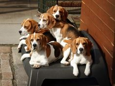Such a handsome bunch!