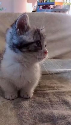 Let me take you to find the cute pets around you Cute Baby Cats, Kittens Cutest, Cats And Kittens, Cute Babies, Baby Animals, Funny Animals, Cute Animals, Little Kitty, Funny Animal Videos