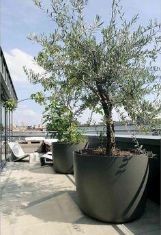 grande-jardinière-olivier-pot-toit-terrasse