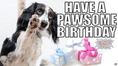 "101 Happy Birthday Dog Memes - ""Have a pawsome birthday."" 101 Happy Birthday Dog Memes - ""Have a pawsome birthday. Happy Birthday Dog Gif, Dog Birthday Quotes, Puppy Birthday, Happy Birthday Sister, Happy Birthday Images, Birthday Memes, Birthday Wishes, Birthday Greetings, Birthday Humorous"