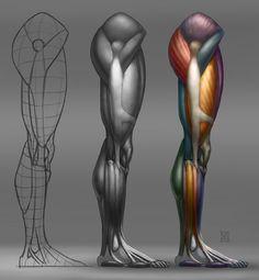 Anatomy Demos