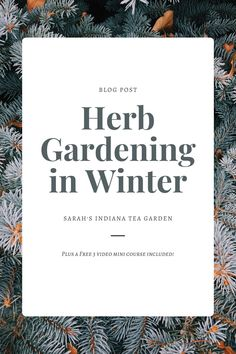 Winter herb gardening can be intimidating for some beginner gardeners. Knowing when to prune, what can grow and how to keep them healthy can be a lot to think about. This post breaks down each of those concerns and will give you the tool you need for this next season. Winter herb gardening | How to grow herbs in the winter | How to grow herbs in winter | Getting your garden ready for winter | Indoor herb gardening | Indoor herb gardening during the winter | growing herbs for beginners