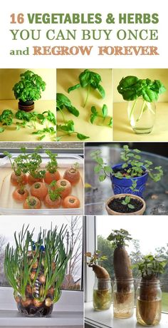 DIY Projects and Crafts — 16 Vegetables & Herbs You Can Buy Once and Regrow...