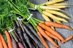Все о выращивании моркови – подробная инструкция для начинающих   На грядке (Огород.ru)