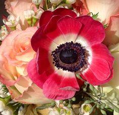 Anemone.  Alison Buck Floral Design