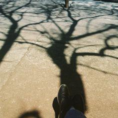 Sob a sombra. #arvoreeamor #canteiroscoletivos #existeamoremsaopaulo #ibirapuera