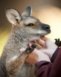 Gift ideas - teen girls: Keeper For A Day Cadet (13-17yrs) | Taronga Conservation Society Australia $95.00  http://www.thekidsareallright.com.au - the #Australian website and forum for #parenting #teenagers