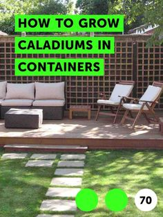 Learn How to Get Rid of Plumbago Common Lawn Weeds, Weeds In Lawn, Grass Weeds, Pineapple Guava, Types Of Grass, Grass Type, Sandy Soil, Bearded Iris, Climbing Roses