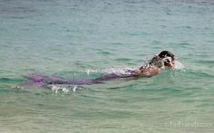 pictures of real mermaids Mermaids Exist, H2o Mermaids, Real Life Mermaids, Mermaids And Mermen, Real Mermaid Tails, Mermaid Swim Tail, Mermaid Cove, Mermaid Art