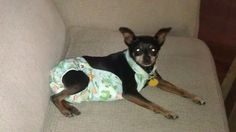 DIY Clever Doggy Diaper Bands for disabled doggies