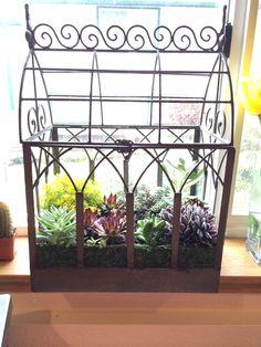 Terrarium succulents.