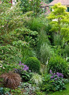 Our Ornamental Grass Border