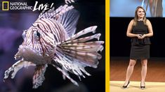 Why Lionfish Should Be Your Favorite Fish to Eat - Nat Geo Live