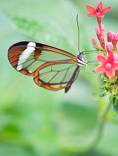 Schmetterlinge sind grazile Wesen und stehen für Sensibilität und Empathie.