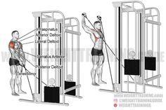 Exercise: Cable Y-raise. Target muscle: Lateral Deltoid. Synergists: Supraspinatus, Teres Minor, Infraspinatus, Middle and Lower Trapezius, Serratus Anterior, Anterior Deltoid, Posterior Deltoid. Mechanics: Isolation. Force: Pull. Best Shoulder Workout, Shoulder Exercises, Weight Training, Raising, Bodybuilding, Muscles, Cable, Target, Middle