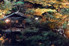 #momiji, #maple, #autumn leaves, #garden, #pond,