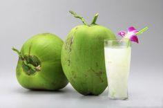 Uống nước dừa xiêm lợi tiểu, nước ối trong   Đại lý dừa xiêm Bến Tre uy tín tại Hà Nội