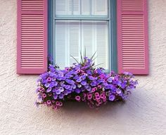 Matched Window Shade and Window Flower Box