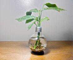 Light bulb planter.
