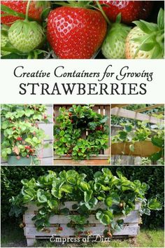 Creative Containers for Growing Strawberries with ideas from Empress of Dirt, Garden Therapy, and Lovely Greens.