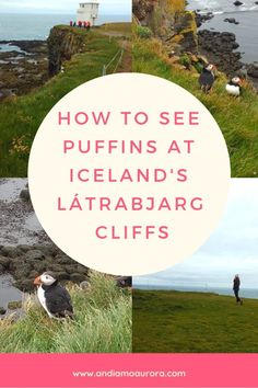 Want to see puffins in Iceland? The Látrabjarg Cliffs in the West Fjords are where you need to go! Photography For Dummies, Sea Birds, During The Summer, Summer Baby, How To Take Photos, Mammals, Iceland, Aurora, Sailing