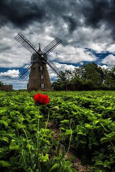 The Wind Queen's Dream by Péter Busa, via Holland Windmills, Old Windmills, Beautiful World, Beautiful Places, Beautiful Pictures, Tilting At Windmills, Blowin' In The Wind, Water Tower, Old Barns