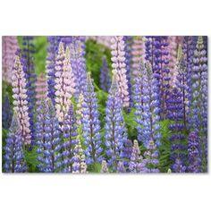 Trademark Fine Art 'Blue Pink Lupine Field' Canvas Art by Cora Niele, Size: 22 x 32, Multicolor
