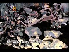 Holocausto - Execução do Mal (Completo e Dublado) - Documentário - Docum...