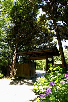 Japanese garden walk of morning #japan #tokyo #rikugien