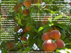 True repentance makes you fruitful  +  El verdadero arrepentimiento te hace fructífero  +  http://www.biblegateway.com/passage/?search=Matthew+3%3A7-10