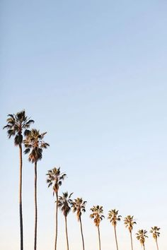 Wall paper summer tropical palm trees 40 Ideas for 2019 Cute Patterns Wallpaper, Aesthetic Pastel Wallpaper, Aesthetic Backgrounds, Aesthetic Wallpapers, Beach Wallpaper, Iphone Background Wallpaper, Tree Wallpaper, White Wallpaper Iphone, Iphone Background Beach
