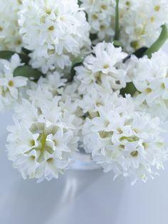 Hyacinth ... ॐ ♥ ▾ ๑♡ஜ ℓv ஜ ᘡղlvbᘡ༺✿ ☾♡ ♥ ♫ La-la-la Bonne vie ♪ ❥•*`*•❥ ♥❀ ♢♦ ♡ ❊ ** Have a Nice Day! ** ❊ ღ‿ ❀♥ ~ Fr 20th Nov 2015 ...
