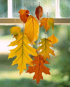Hang pretty fall leaves in the window with linen thread or fishing line