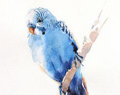 Budgie uccello pittura, pittura, arte dell'uccello, acquerello, stampa dimensioni 8 X 10 pollici per l'arredamento della camera e regalo speciale n. 196 dell'acquerello di uccello
