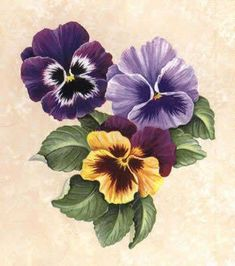 flores, plantas y frutas - Pililucha - Picasa Web Albums - My site Art Floral, Fabric Painting, Painting & Drawing, Watercolor Flowers, Watercolor Paintings, Pansy Tattoo, Pictures To Paint, Botanical Prints, Vintage Flowers