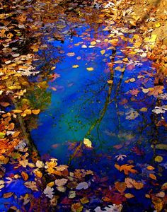 """""""Adopt the pace of nature: her secret is patience."""" - Ralph Waldo Emerson (photo by Misty Dawn Seidel) Misty Dawn, Ferrat, Beautiful World, Autumn Leaves, Golden Leaves, Mother Nature, Nature Photography, Photography Photos, Beautiful Pictures"""