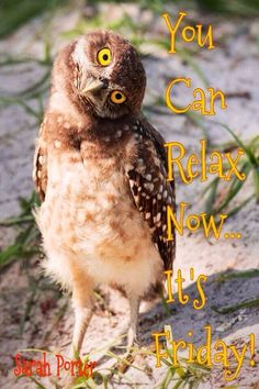 Friday owl Its Friday Quotes, Friday Humor, Have A Great Day, Good Day, Happy Everything, Months In A Year, Funny Animals, Best Quotes, Laughter