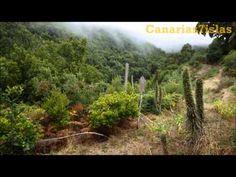 Caldera del Agua, Norte y Queso en el marco del Festival de Senderismo La Palma 2013