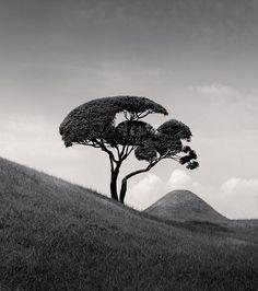 Tree and Mountain, Kumamoto, Kyushu, Japan. 2002