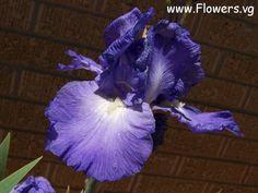 Photo flowers_pics_2152.jpg